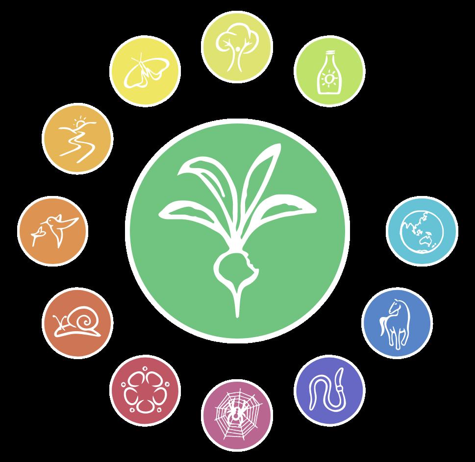 Illustration du principe de conception n°3 en permaculture : créer une production