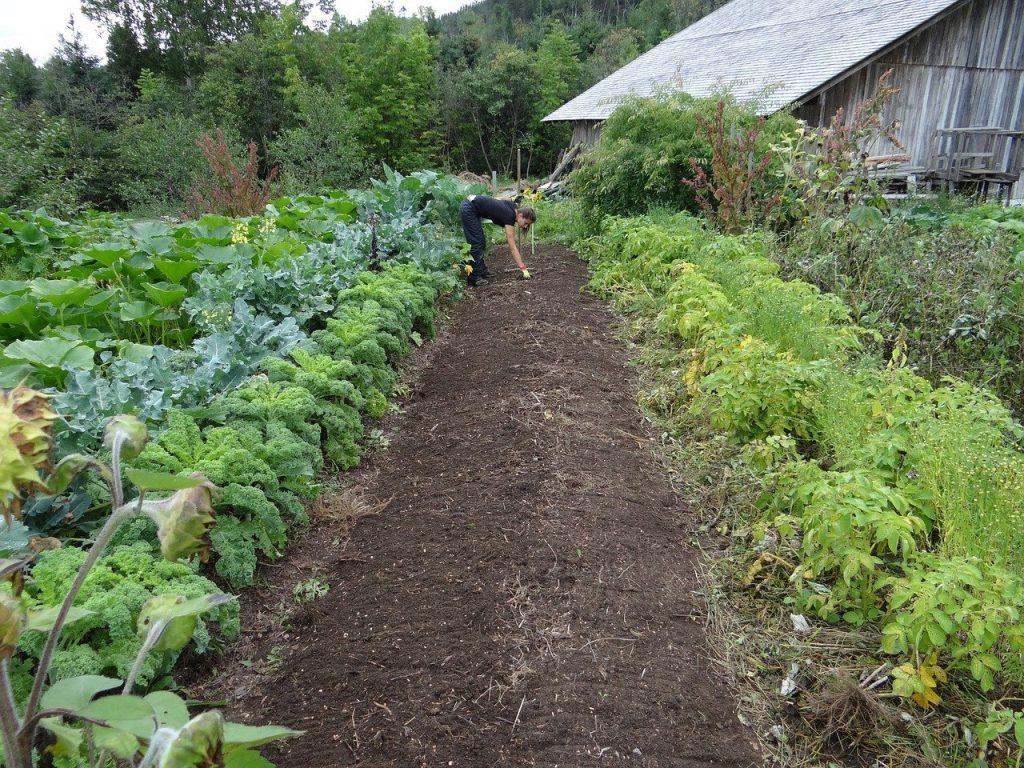 Culture sur butte en permaculture