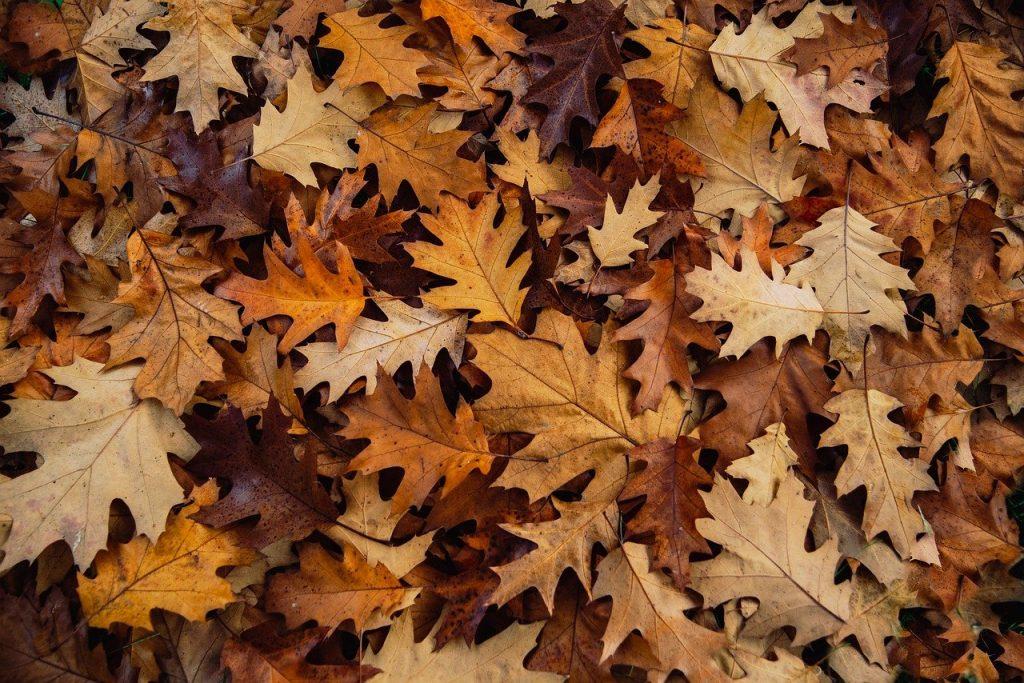 feuilles mortes sur le sol mulch