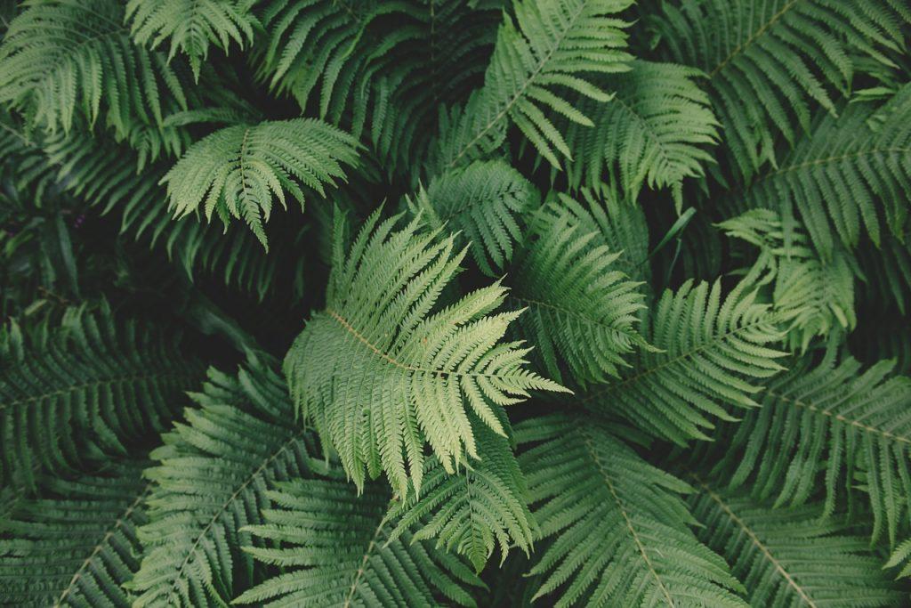 feuilles fougère focus mulch