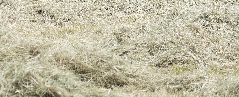 tonte gazon herbe sèche mulch