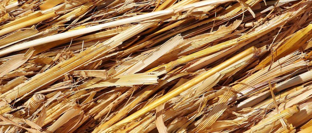 focus paille herbe mulch